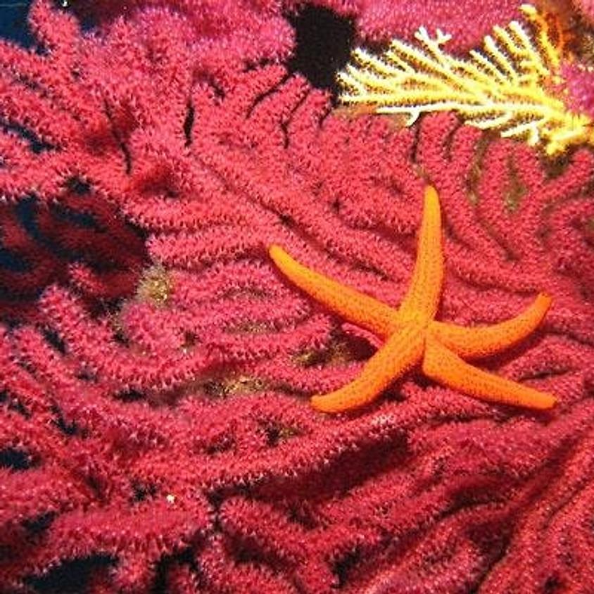 J'ai RDV avec la Biodiversité : la vie des petits fonds marins