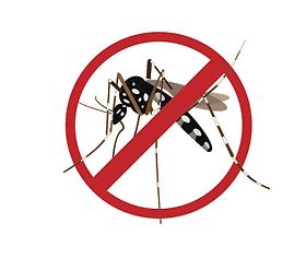 no moustique