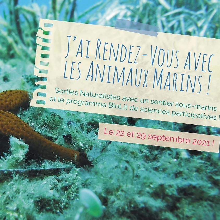 J'ai rendez-vous avec la biodiversité : à la découverte des animaux  marins !