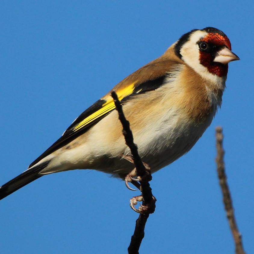 J'ai RDV avec la Biodiversité : aujourd'hui, les oiseaux (1)