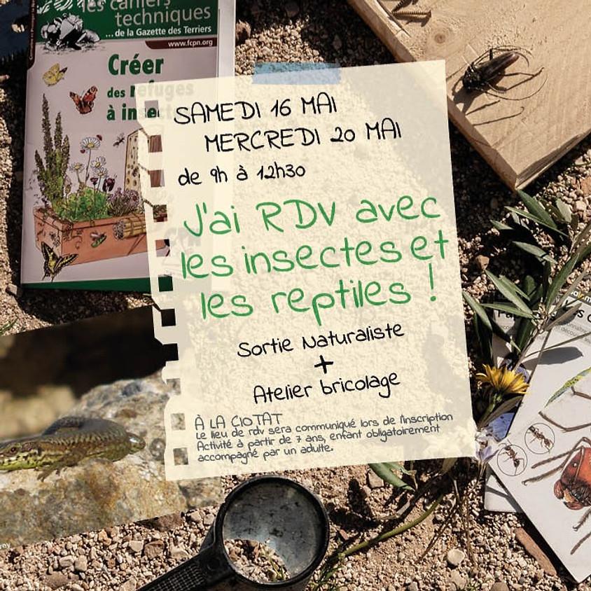 J'ai RDV avec les insectes et les reptiles !