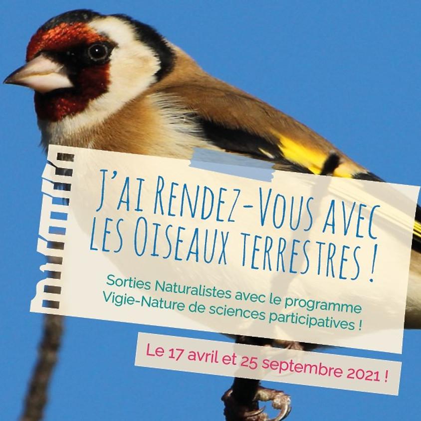 J'ai rendez-vous avec la biodiversité : à la découverte des oiseaux terrestres !