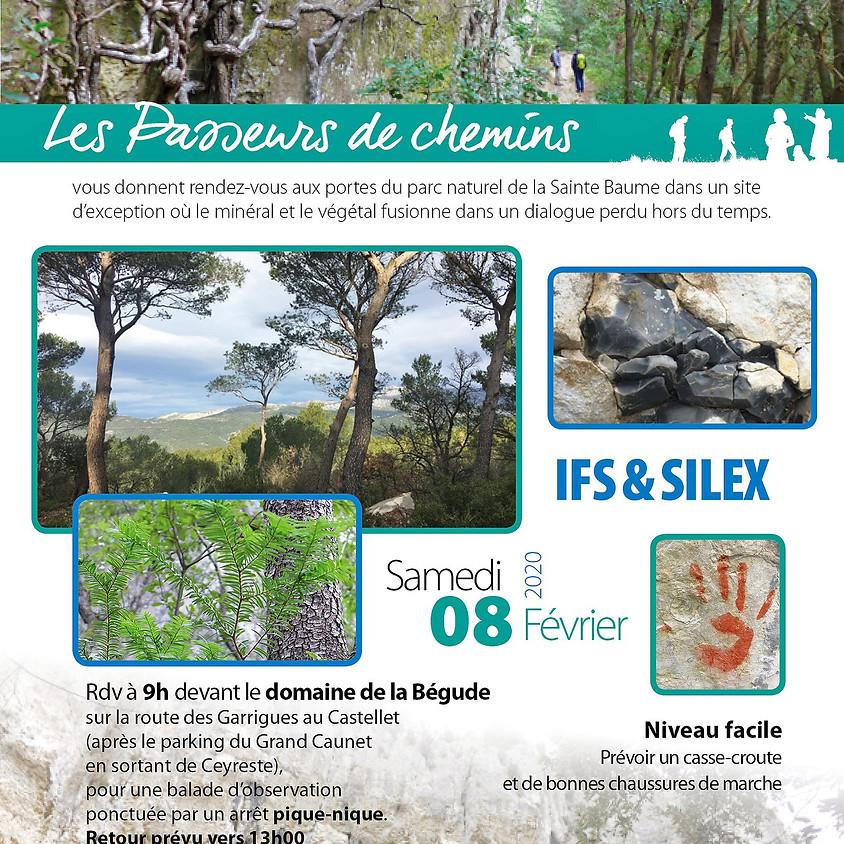 Sortie Passeurs de Chemins : Ifs et Silex