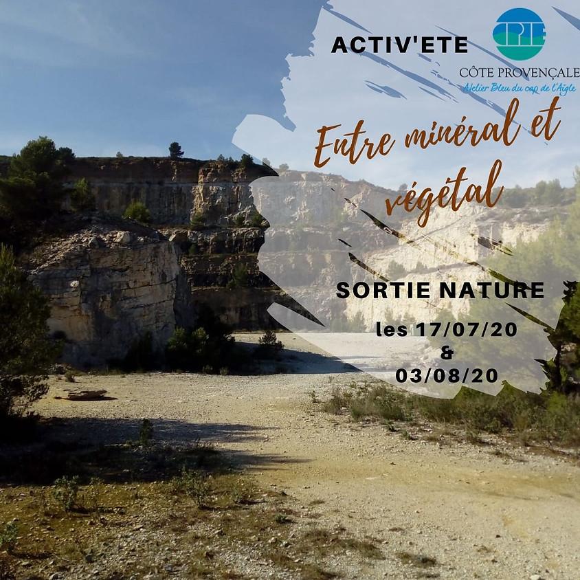 """ACTIV'ETE spécial """"sorties"""" : """"Entre minéral et végétal"""""""