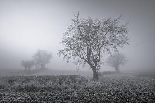Fog, West Fife (Print Only)