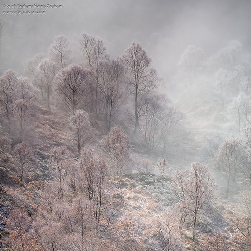 The Forest, Trossachs (Print Only)