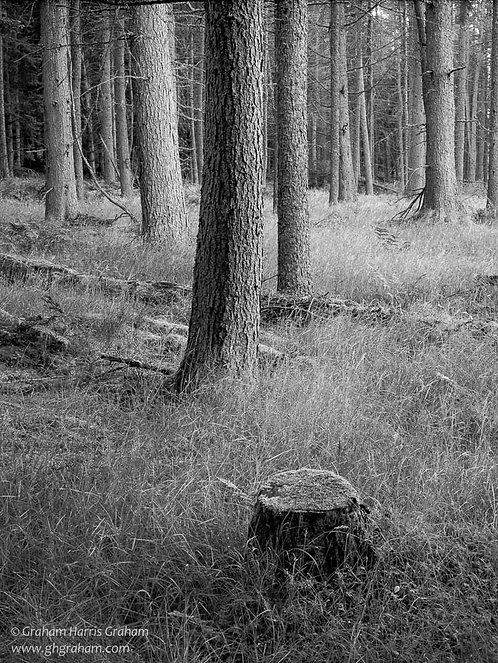 Stumped, Kinclaven