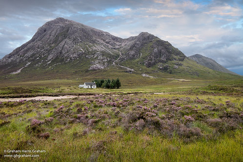 Heather, Glencoe (Print Only)