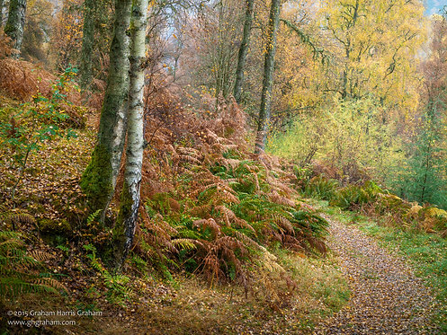 Candy Path, Birnam Hill
