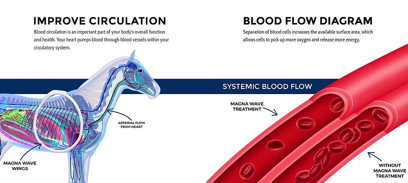 Understanding Equine PEMF
