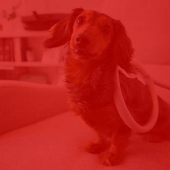 red pic.jpg
