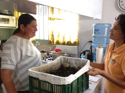 Experiencia de compostadora