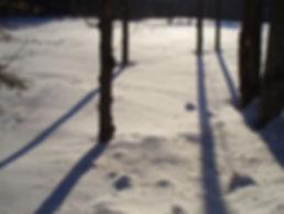 backlit trees in snow low res.jpg