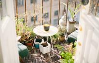 Growing edible greenery on the balcony