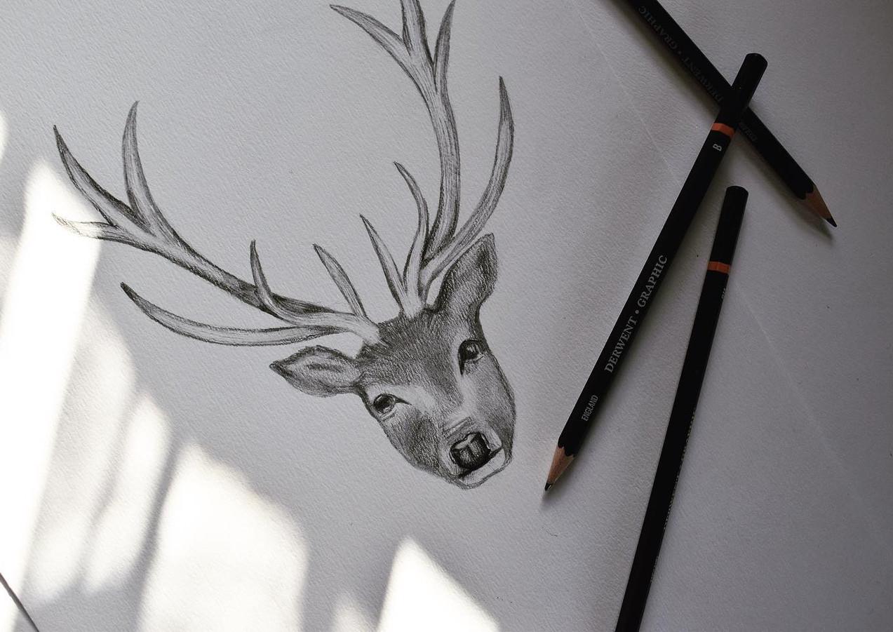 Stag Illustration.jpg