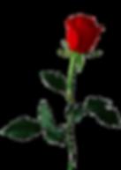 dMcLKB7Ta_edited.png