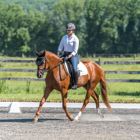 CT Dressage Association Show - July 19