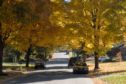 Autumn_CoronadoEdit