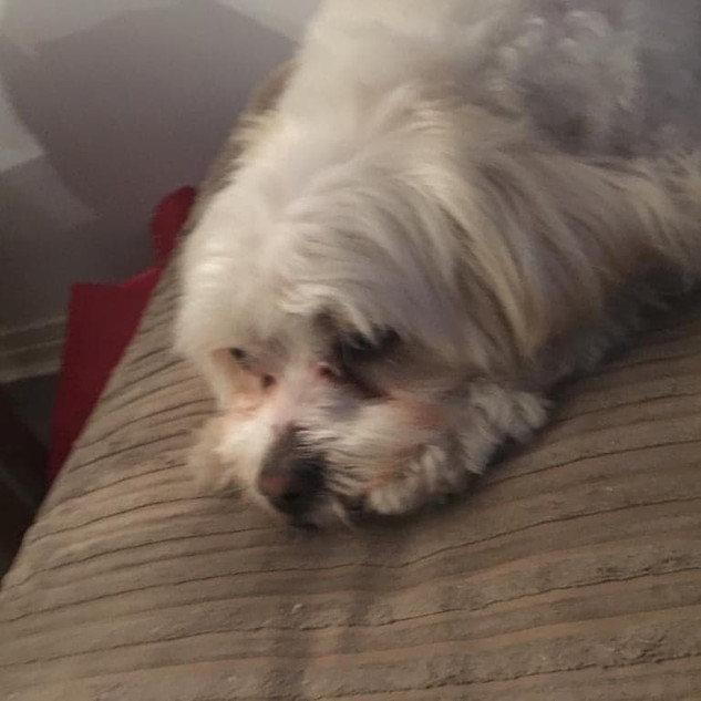 cute little Teddy deep in thought