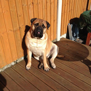 Olly Sunbathing