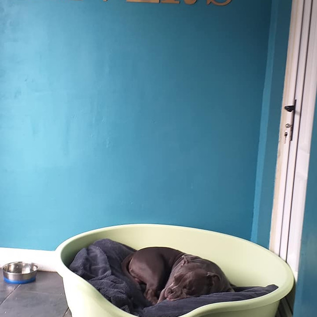 "Bhodi having a nap at ""Oliver's Dog Hotel"""