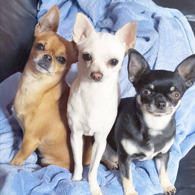 Minnie, Bella and Tink posing