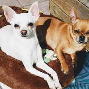 Minnie and Tink sunbathing