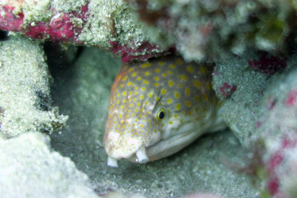 Scuba Diving Sosua & Cabarete - Snor