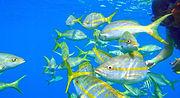 Scuba Diving Sosua & Cabarete - Snorkelling