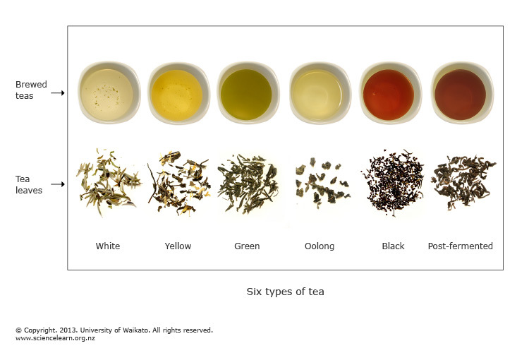 Six types of tea