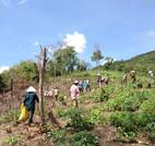 Plantation (Vietnam)