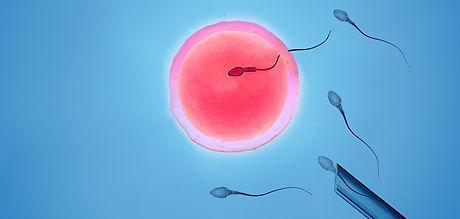 insemination.jpg