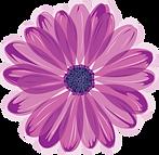 Purple Daisy.png