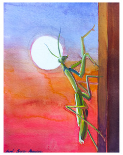 Mantis and the moon