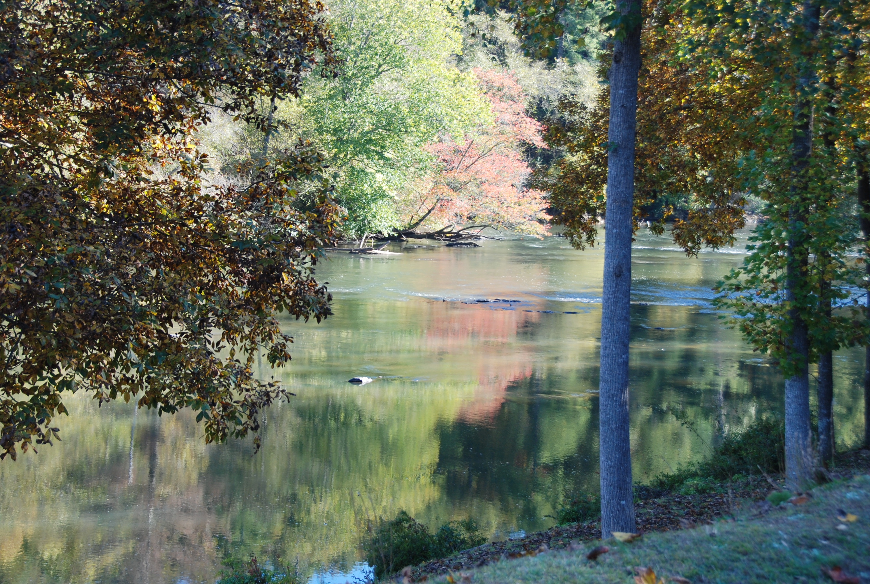 Chattahoochee River at River Park