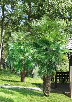 Palms at River Park