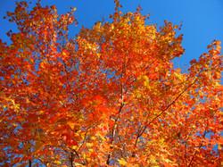 Fall Colors at River Park