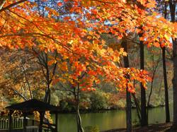 Fall Display at River Park