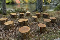 Wood Stump Gathering at River Park