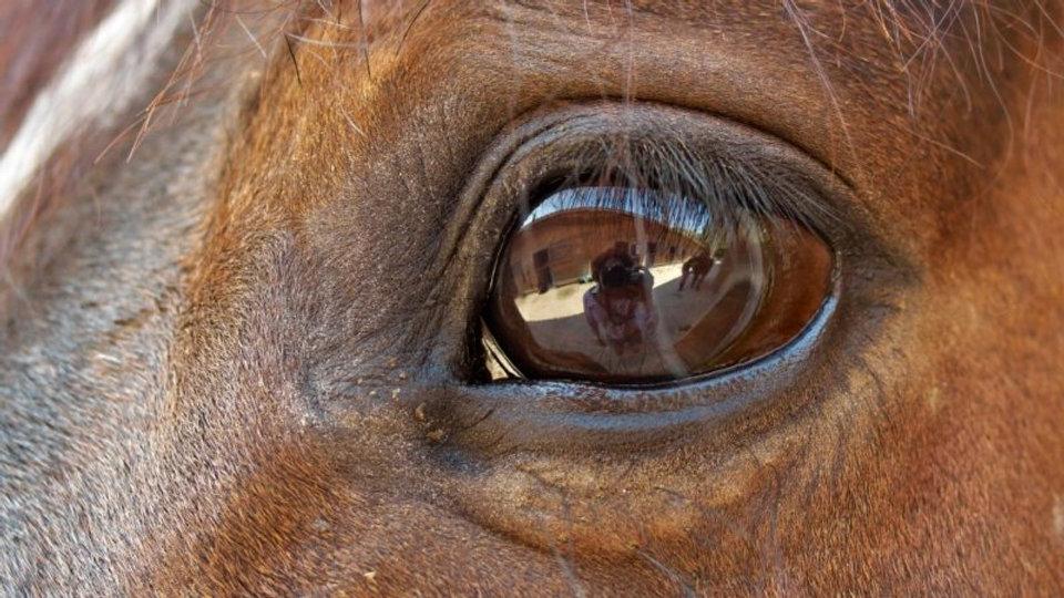 horse-eye.jpg