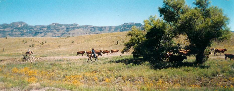GrayRanch_Cowboy.jpg