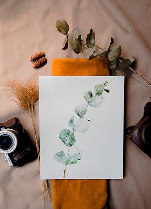 Eucalyptus - Vert clair
