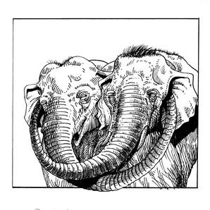 elephant 34.jpg