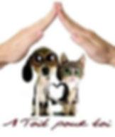 adoption-587d3fdae192e.jpg