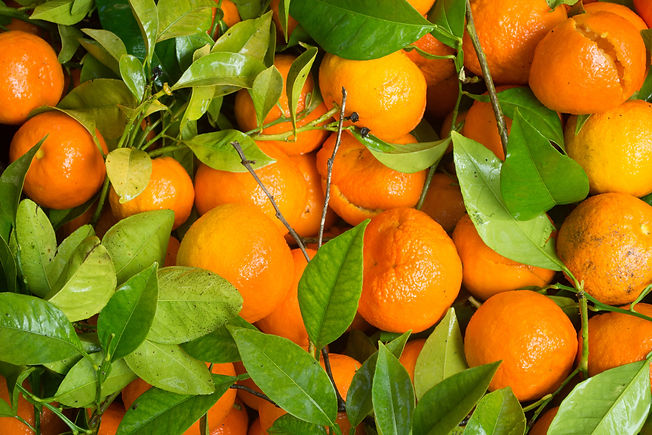 tangerines-background-2.jpg