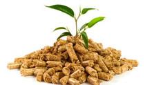 Wood biomasses