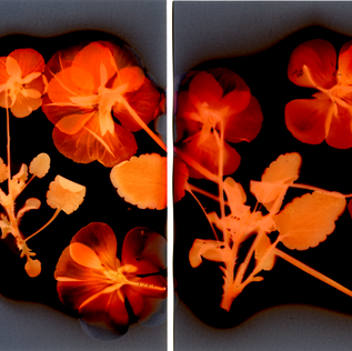 Violets on Fire