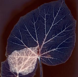 Janice Mauro's Leaf