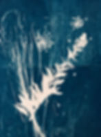 Cyanotype Reproductions_Sept 2019 - 4-pa