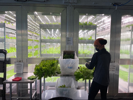 What is an Indoor Vertical Hydroponic Farm?